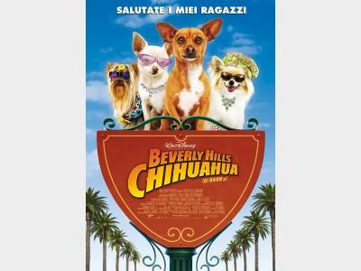 chihuahua_fm.jpg