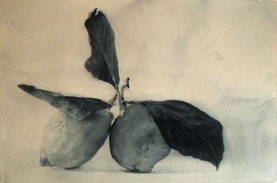 Dipinti: Limoni, di Oscar Morosini